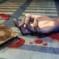 UE: bisogna evitare l'aumento di pregiudizi verso l'islam